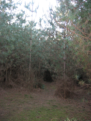 Trail entrance that leads to site of the Rendlesham Forest UFO incident