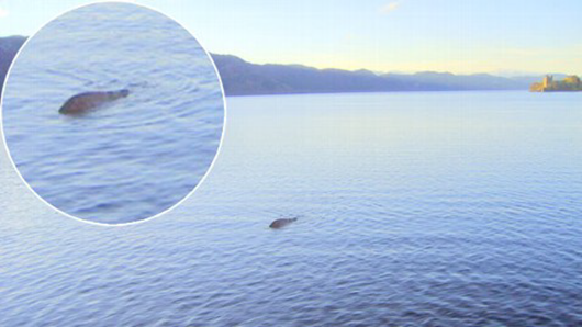 Picture of Loch Ness Monster (Nessie) taken in late 2012