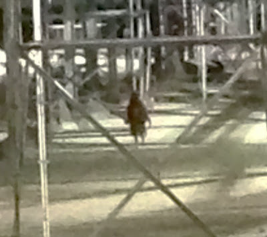 Cropped photo of mysterious kenedy, texas beast