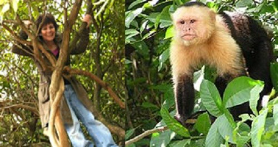 Marina Chapman, the girl who was raised by monkeys, and a capuchin monkey in the wild