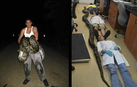 Record-breaking 18-foot python snake found in Florida