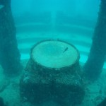 Central section of Neptune (Atlantis) Memorial Reed - underwater cemetery