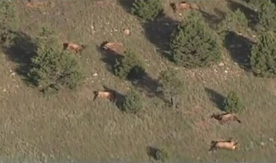 120 dead elk carcasses found near Las Vegas, New Mexico