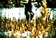 Creature photographed at Skinwalker Ranch