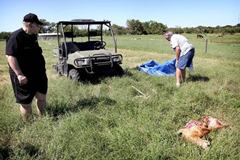 Sheep mutilated in Port Lavaca, Texas