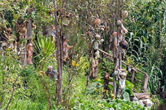 Hundreds of dolls hanging from trees on Island of the Dolls