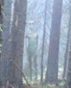 Zoomed image of giant, gray humanoid-like alien photographed in Bulgarian forest thumb