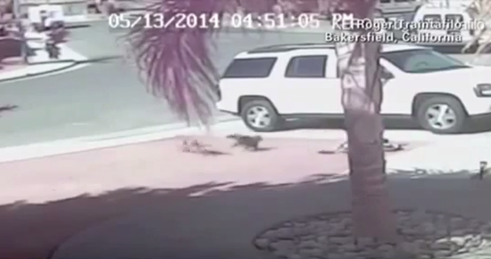 Family cat saves boy from attacking dog