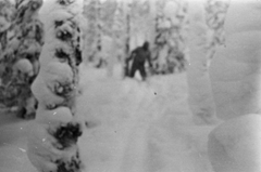 Photo purported to have been taken by a Dylatov Pass team member showing a Russian yeti (Almas or Menk)