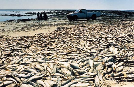 Tons of fish killed by toxic red tide off African coast in 2014