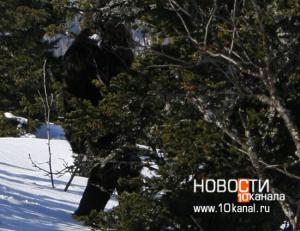 Siberian Bigfoot photo sequence taken in 2001 in Russia