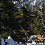Siberian Bigfoot photo sequence taken in 2001 in Russia