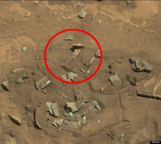 Anomalous bone (thigh bone) found on Martian surface