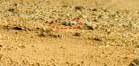 Lizard with long tail found in Martian photograph
