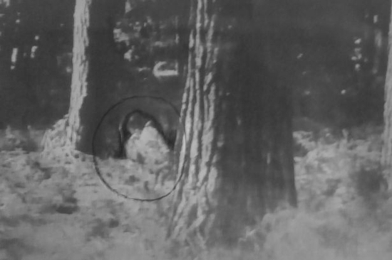 Cannock Chase resident reports taking this photo which she believes captures Slender Man for the first time