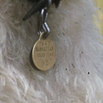 Among the photos was a dog photo - note the date on this closeup of the dog's ID tag