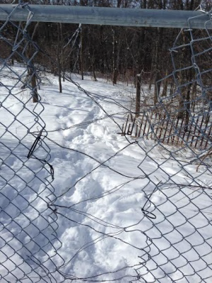 Police believe the tunnel diggers entered the property through this hole in the fence