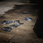 Bags containing body parts of Morris Black