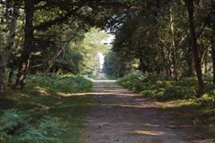 Rendlesham Forest in Suffolk, England