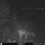 Huge, lit UFO over Georgia caught on GameCam flying over feeding deer thumb