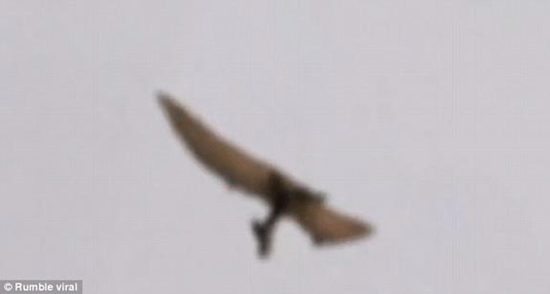 Prehistoric pterodactyl captured on amateur video