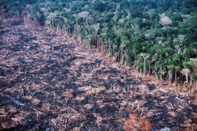 Deforestation damage to forrest