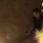 Local Australian man attempts to clear the hairy panic tumbleweeds using a leaf blower