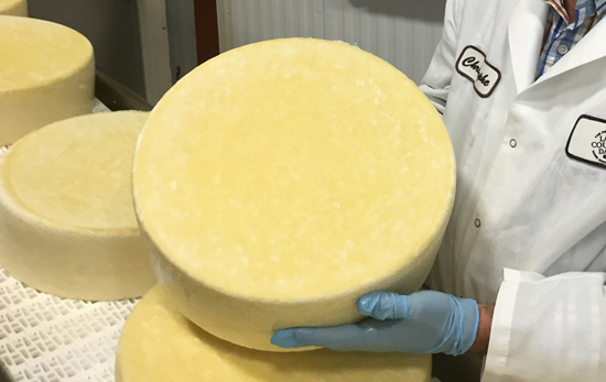 "FDA uncovers major parmesan cheese maker scam - grated cheese ""filled"" with wood pulp"