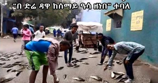 Residents stunned as fish fall from sky over drought-stricken eastern Ethiopia