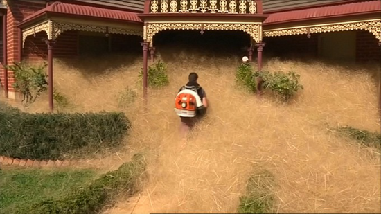 """""""Hairy Panic"""" tumbleweeds invade Australian city covering cars and home with nuisance dead plant"""