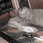 Mummified body of Manfred Fritz Bajorat found aboard his driftin yacht, the Sayo thumb