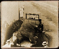 Photo purported to show the burial of of Mary the elephant