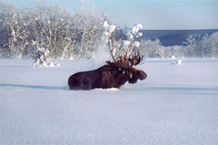 Siberian wilderness where Game2Winter reality TV show will take place